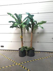 Bananenbomen